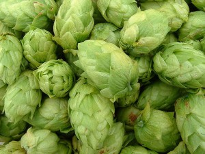 Hops - at The Brewclub.com
